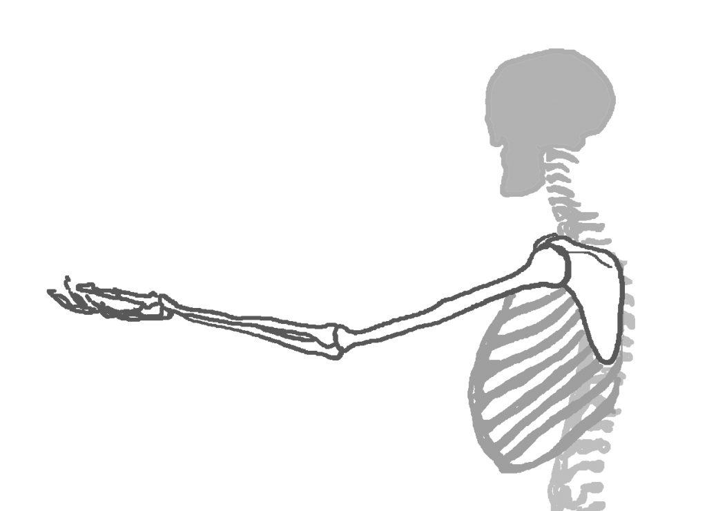 肩甲骨から指先までの長さをイメージしてみましょう。(Illustrated by Pantaya)